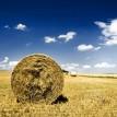 field-hay-wheat-haystack_