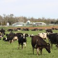 dairy farm project pic