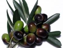 olive n branch 2